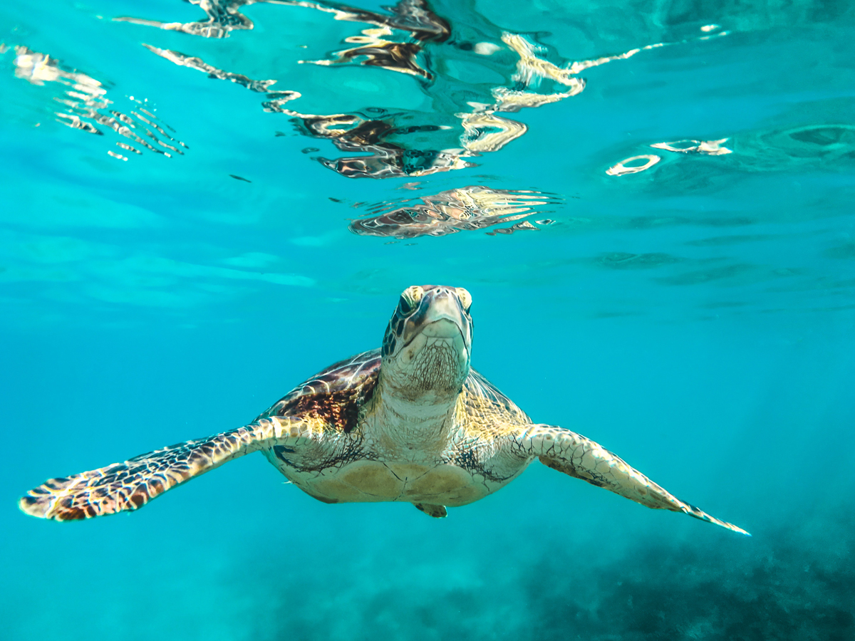 Photo of Tortoise could swim faster than walking
