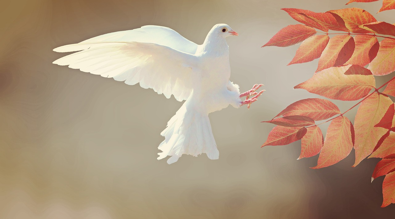 Photo of White pigeon making best scene for home
