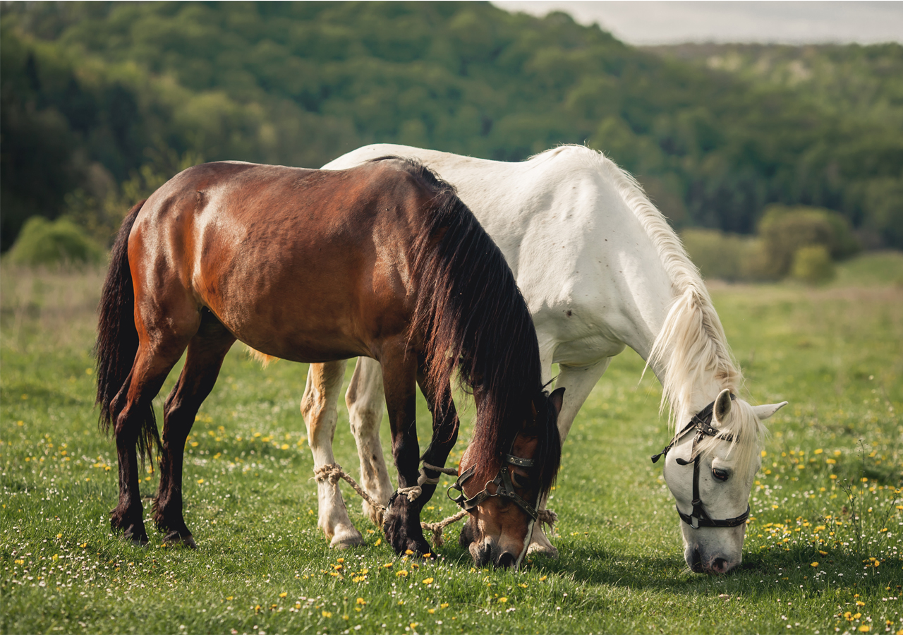 Photo of Rearing horses are more easier but expensive