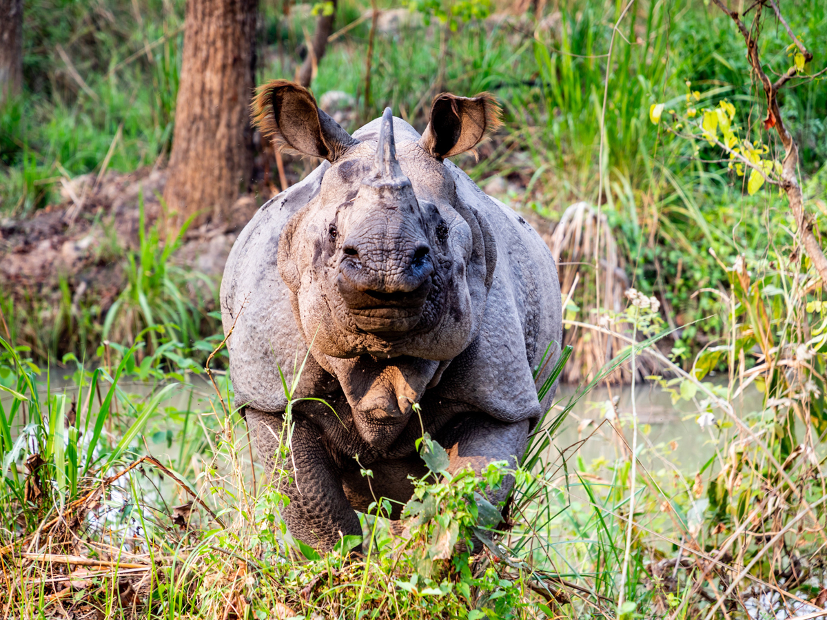 Photo of One horn rhino is nearly about extinct