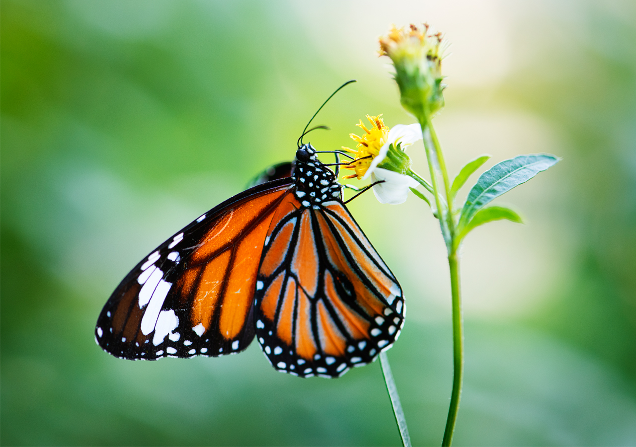 Photo of Newly habitat is hard for butterflies to live